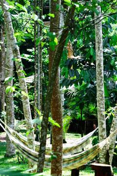 Auf einen Sprung in den Regenwald