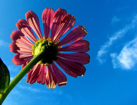 flower1597630678_f2c5c566ea_z