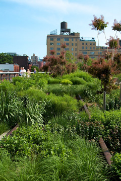 High Line Park - New York